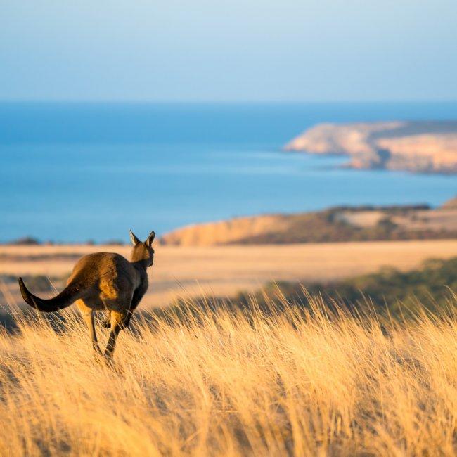 australia-south-australia-kangaroo-island