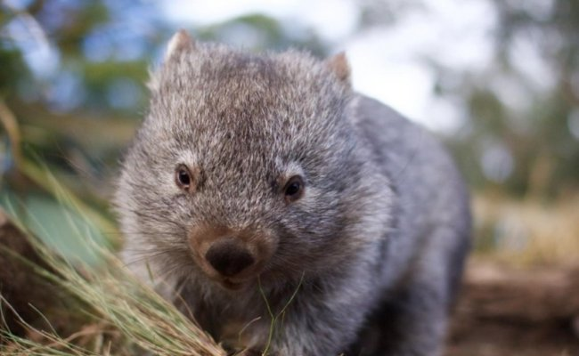 The wonders of Tasmania